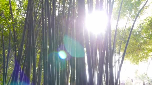 Bamboo forest natural environment construction material, sunlight canopy harvest travel