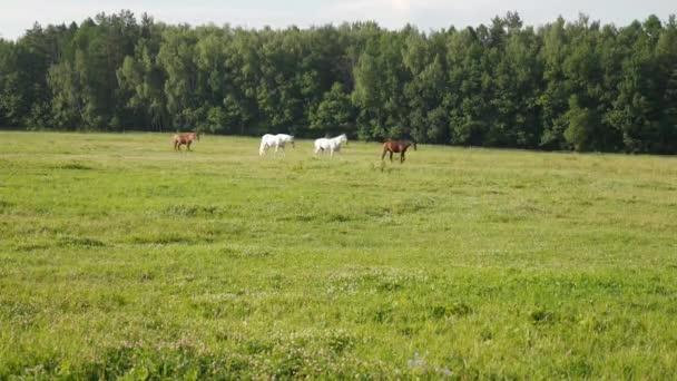 Čtyři koně chůzi v linii na zelené pastviny