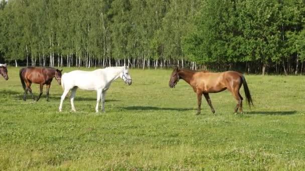 Pferde suchen miteinander und gehen gemeinsam
