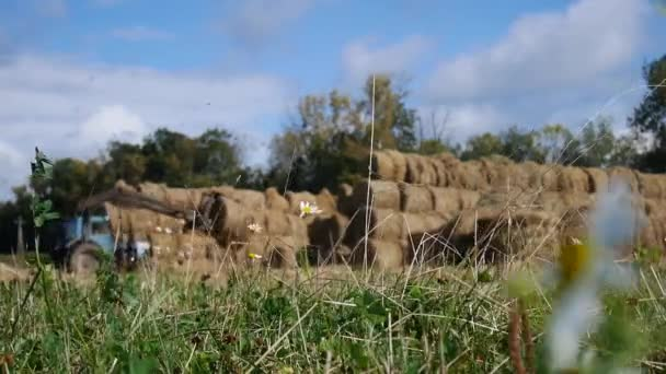 tractor unloads bales of hay in the field