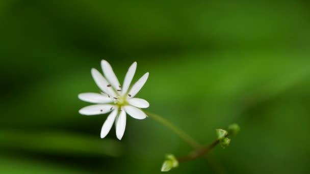 zelené trávy a chamomiles v přírodě