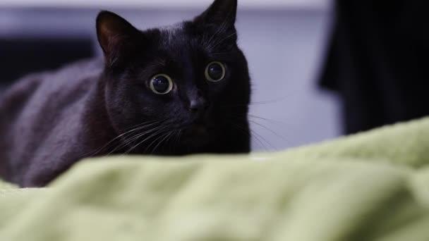 macska arra készül, hogy ugorj rá valami ő zaklatás