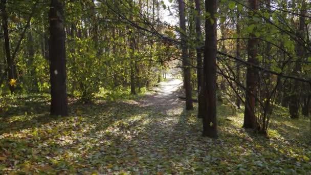 őszi levelek alá. színes őszi szezon erdő
