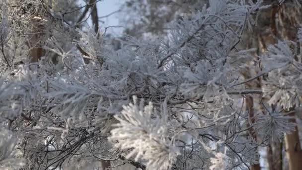 Beautiful winter fir-tree with snow