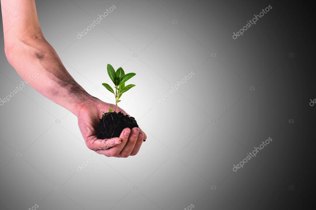 Hands holding green small plant (Business growth and new life concept) focused on plant
