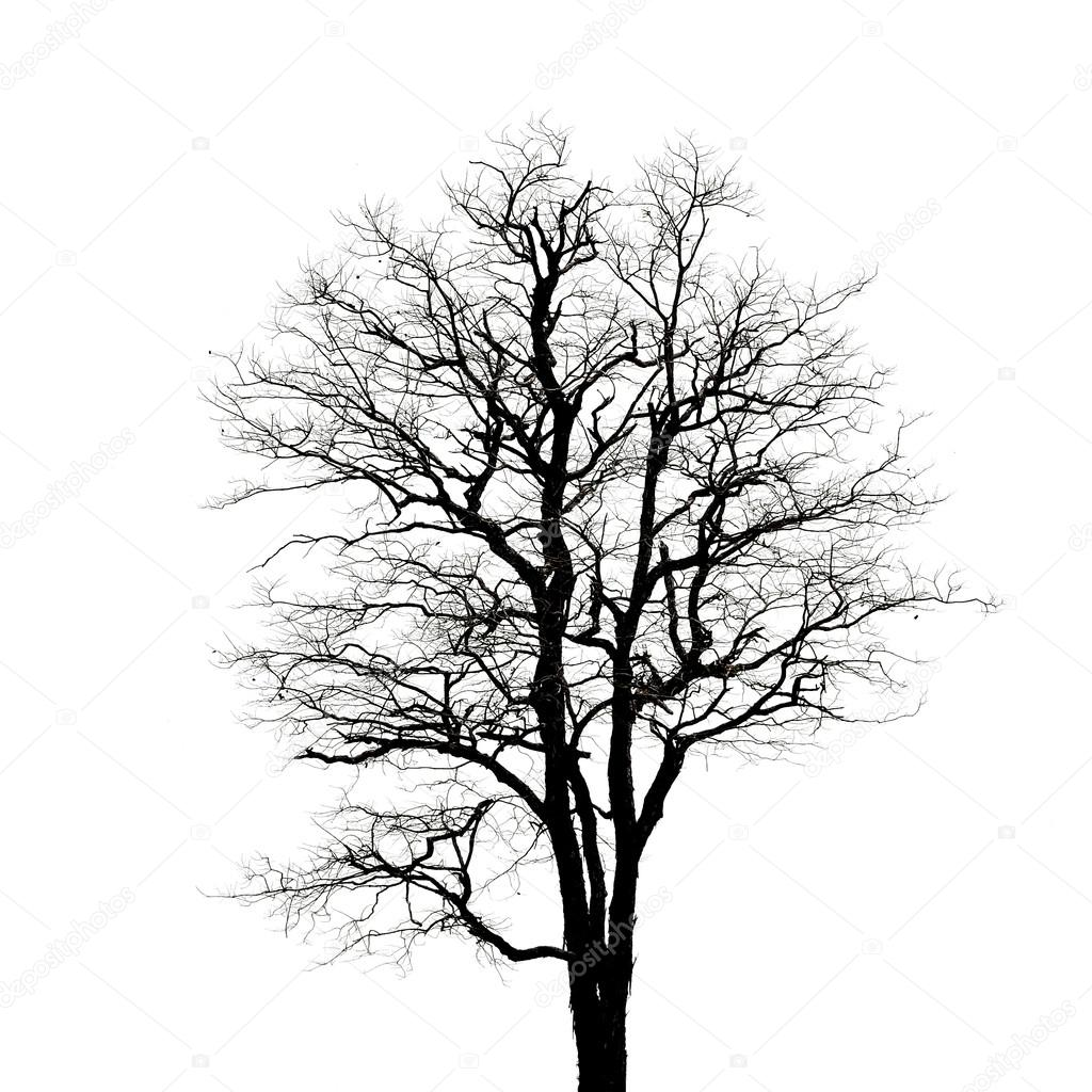 Dead tree silhouette. dry tree without leafs isolated