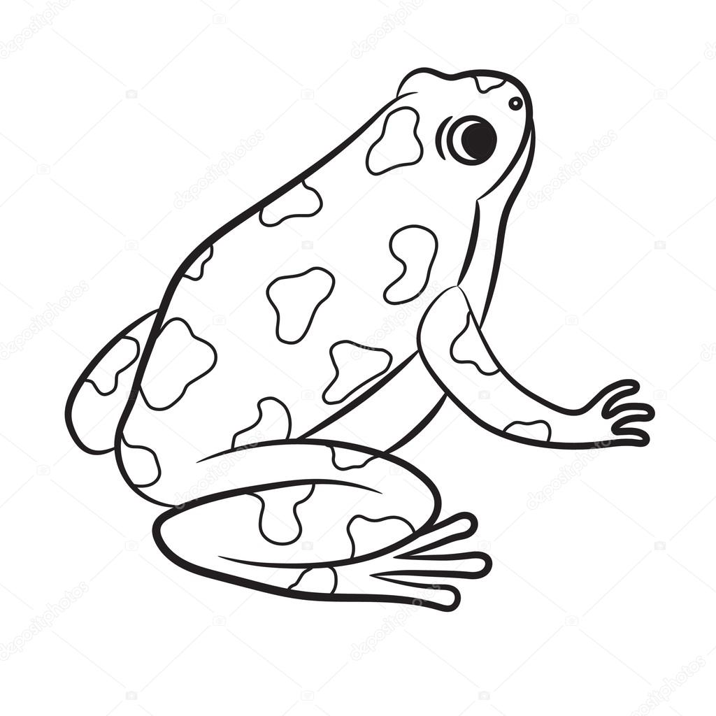 Poison Dart Frog coloring page - Animals Town - animals color ... | 1024x1024