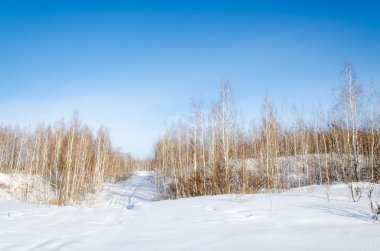 the nature of the southern Urals