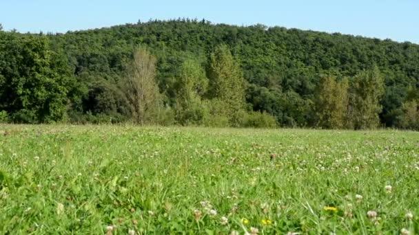 Wiese (Blumen mit Gras) - Wald mit Bäumen im Hintergrund - blauer Himmel - sonnig - Schieber - Schwerpunkt Wald