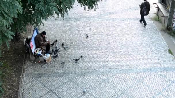 bezdomovec Živí holubi na ulici - lidé pěšky kolem něj - chodník a strom