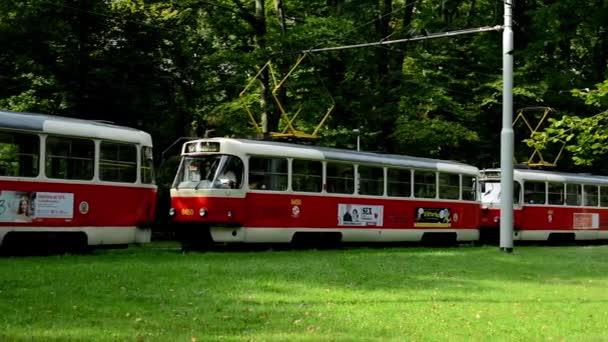 Tramvaje čekat v parku (lesní - stromy) - slunečno