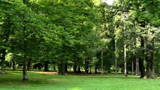 Panorama of park (trees) - sunny - grass