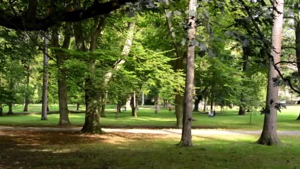 Park (forest) - trees - group of children in the background