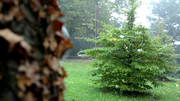 Detail of a tree trunk with dry leaves - forest (trees) - morning mist