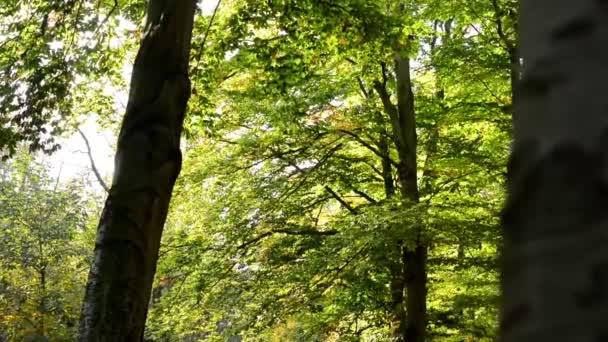Podzimní park (lesní - stromy) - korunách (větve a listy) a kufr