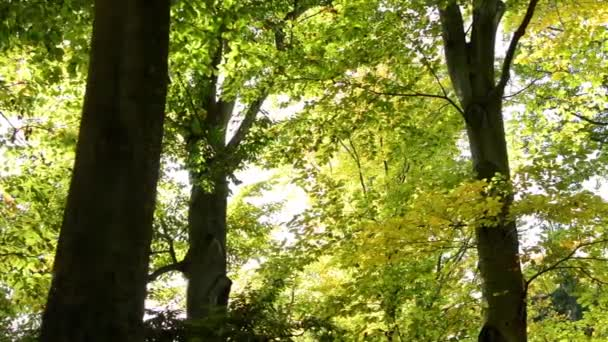 Autumn park (forest - trees) - treetops (branch and leaves)