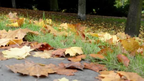 Őszi park - lehullott levelek és elérési útja (kerékpáros) - Vértes