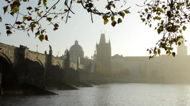 Karlův most s strom (pobočka) - sunrise - Praha, Česká republika - řeka Vltava