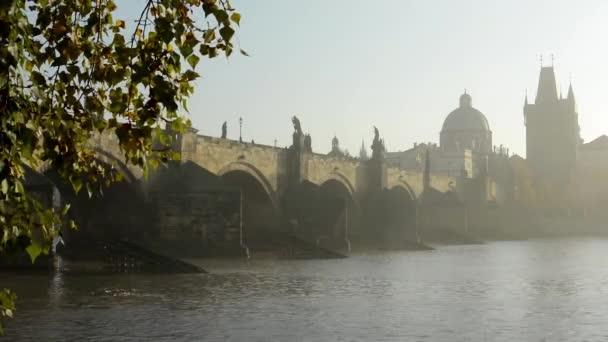 Karlův most s strom (pobočka) - sunrise - Praha, Česká republika - řeka Vltava - ranní mlhy