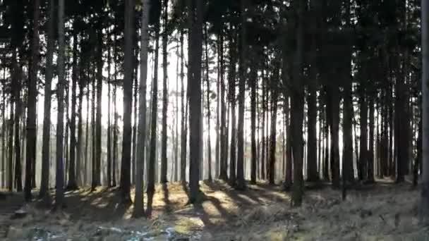 Csupasz erdő - napos repül