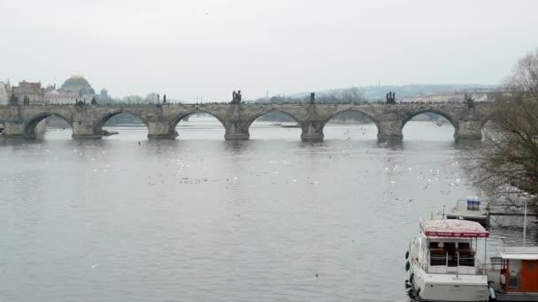 Karlův most v Praze, Česká republika - ptáci - Vltavy - zataženo