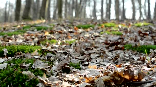 Autumn forest - fallen leaves and sunbeams