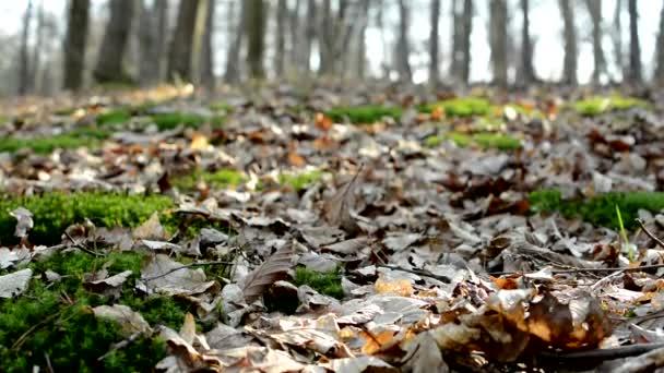 Őszi erdő - lehullott levelek és a napsugarak