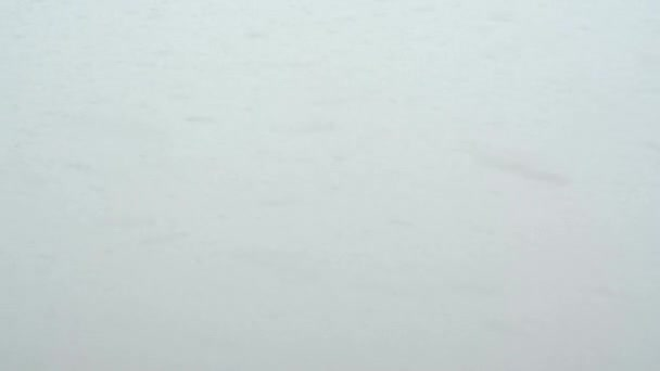 snowstorm - background - snowflakes