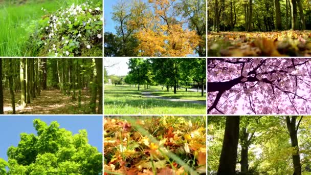 4K compilation (montage) - colourful nature - forest and parks - autumn foliage - blossoming trees - trees and flowers