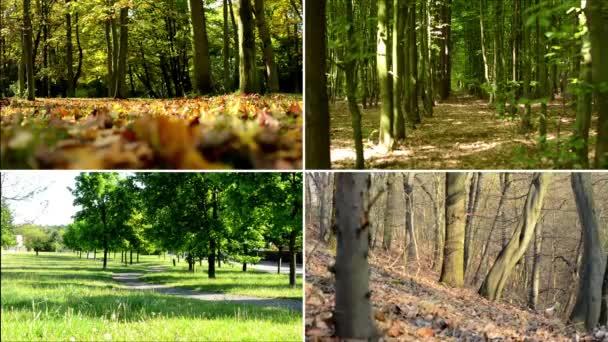 4k compilazione (montaggio) - natura - (foresta) alberi - quattro stagioni