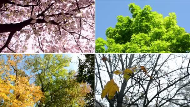 Compilazione 4k (montaggio) - natura - alberi - quattro stagioni