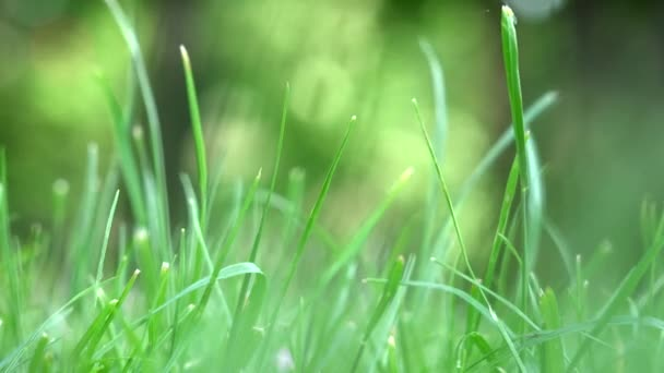 green grass moving in the breeze