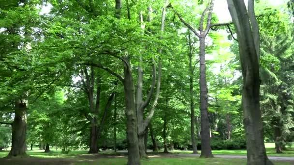 Panorama lesa (Park)-léto