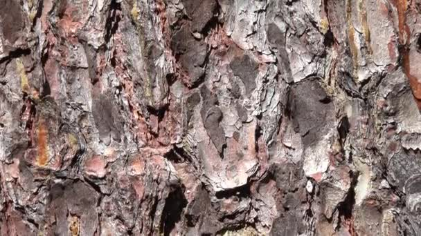 Stromová kůra - detail - pohyb