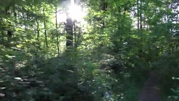 természet (forest) - fák, a nap (nap sugarai) - steadicam