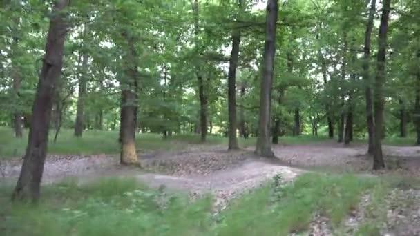 Příroda (Les) - stromy