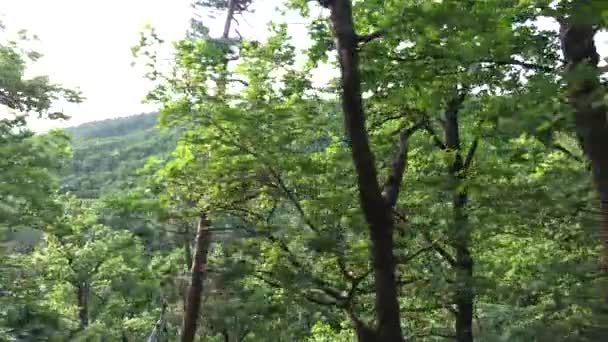 nature (forest) - trees - treetop