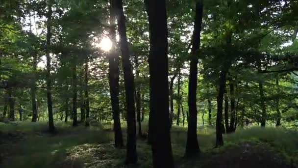 nature (forest) - trees with sun (sun rays) - steadicam