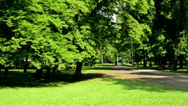výhled na slunný harmonické parky s cestou