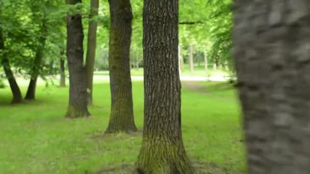 kamera nézet-Dodge a fák a parkban-Steadicamnél