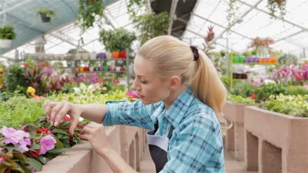 Ženské květinářství zkoumá, listy a květy rostlin, zahradní centra