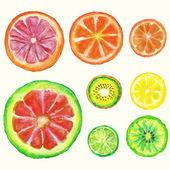 Sada akvarel citrusů s listy