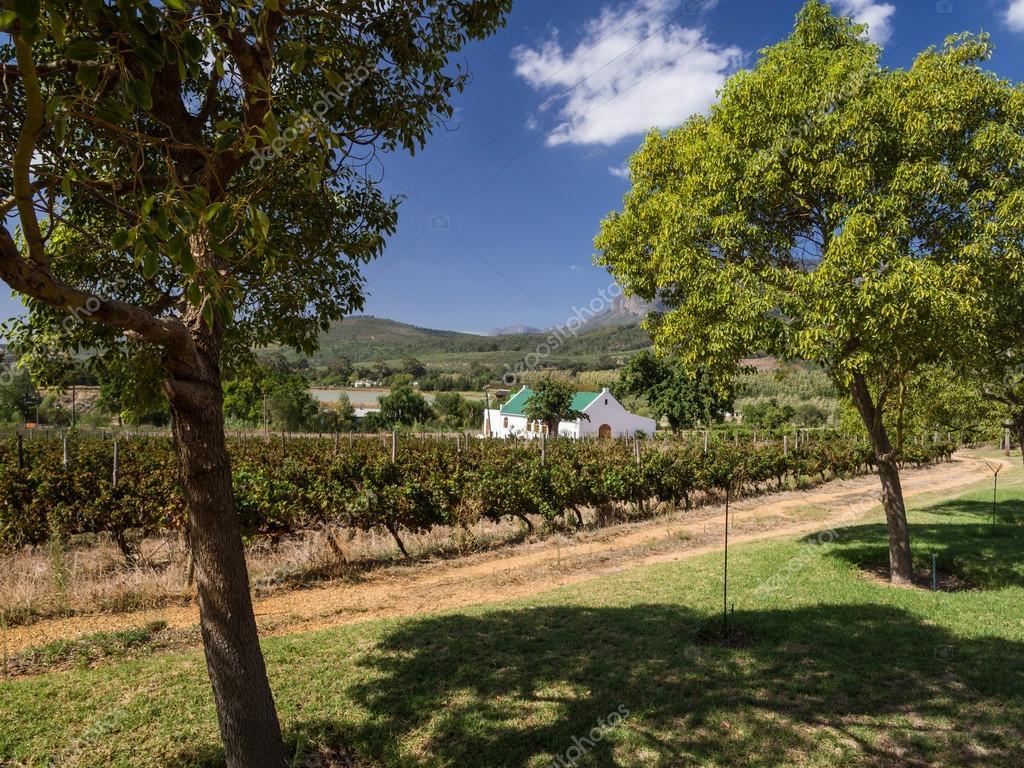 Vineyards in Western Cape