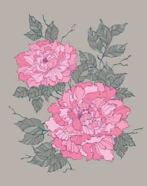 Pink peony rose flower on grey background illustration