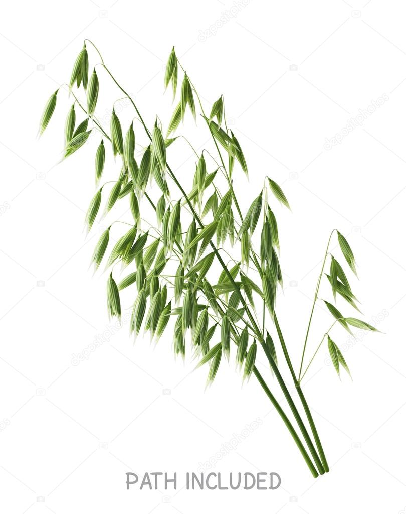 Single isolated oats head path included 2 white background