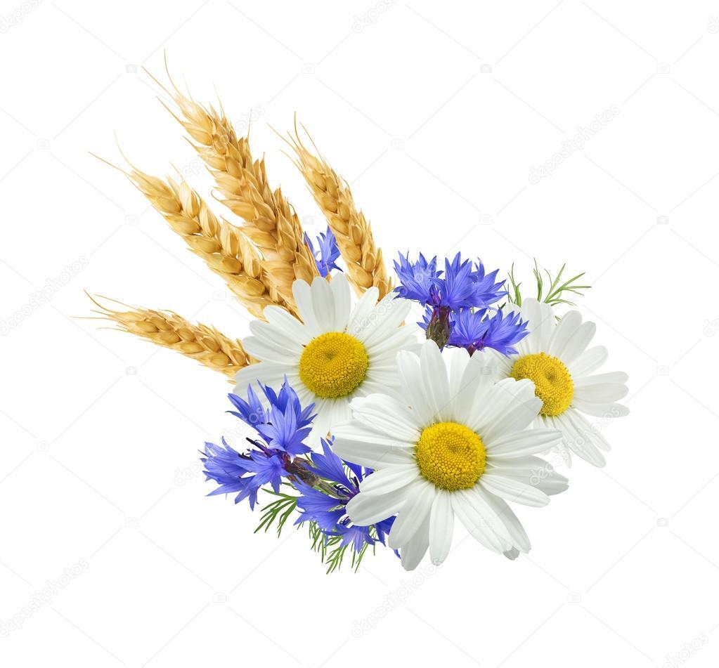 Wheat blue cornflower chamomile isolated on white background