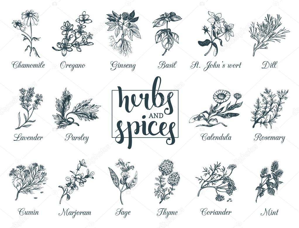 Herbs and spices set.