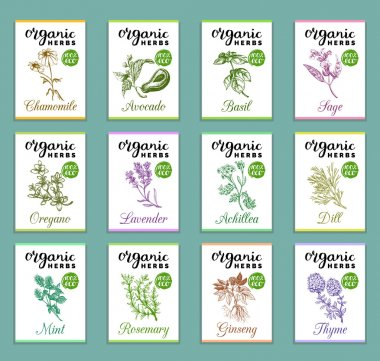 Herbs and spices cards set.