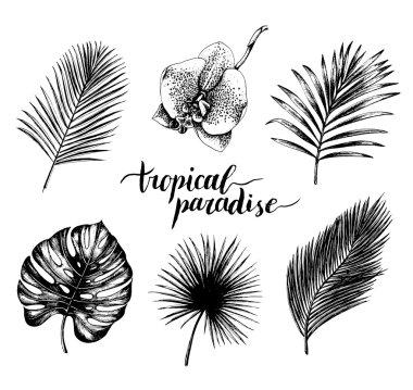 vintage tropical plants set.