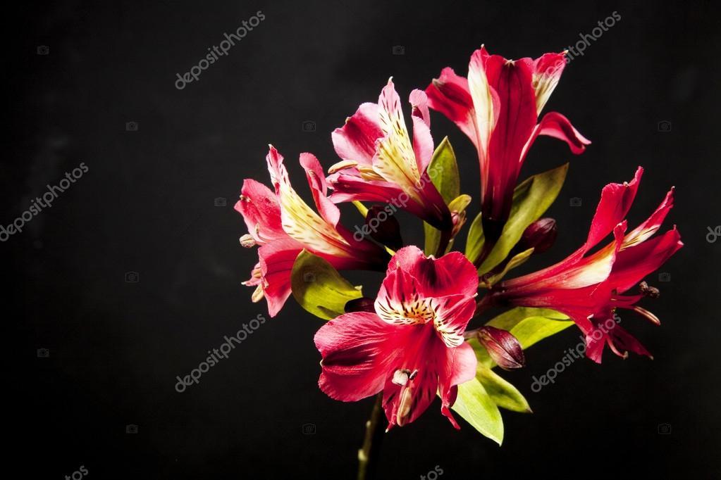 Una flor hermosa — Fotos de Stock